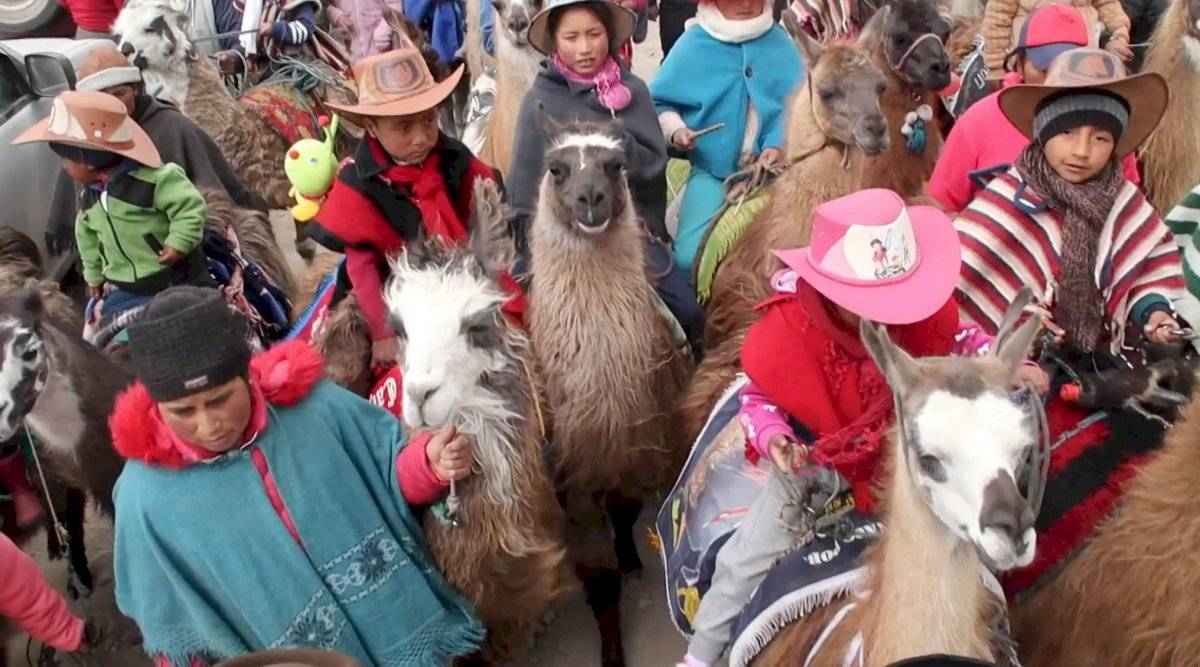 Llamas Ecuador