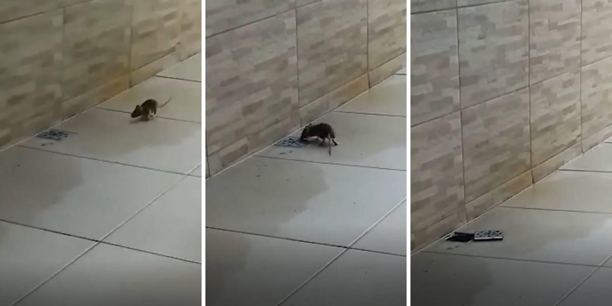 VÍDEO: Rato inteligente abre tampa de ralo para escapar da morte