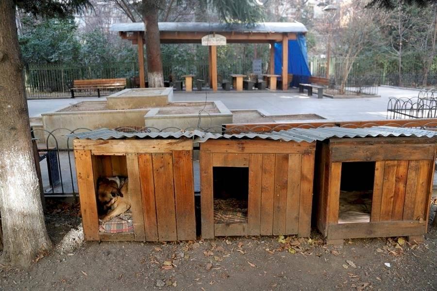Los perros callejeros de Tiflis dejan de ser una plaga a base de cuidados
