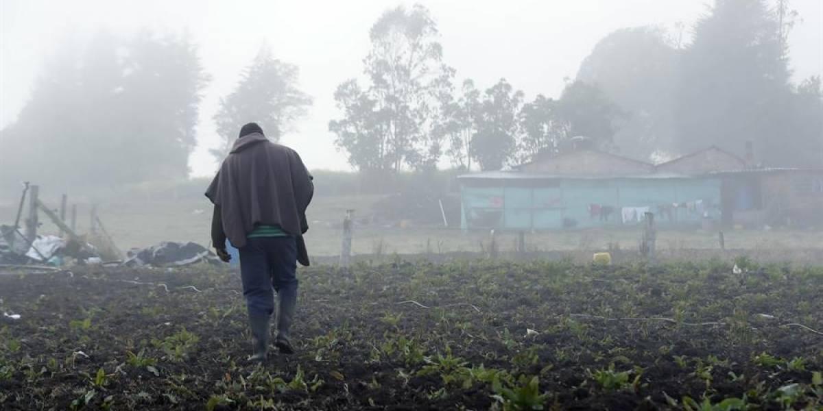 Heladas destruyen cultivos y afectan a más de 14.000 familias campesinas