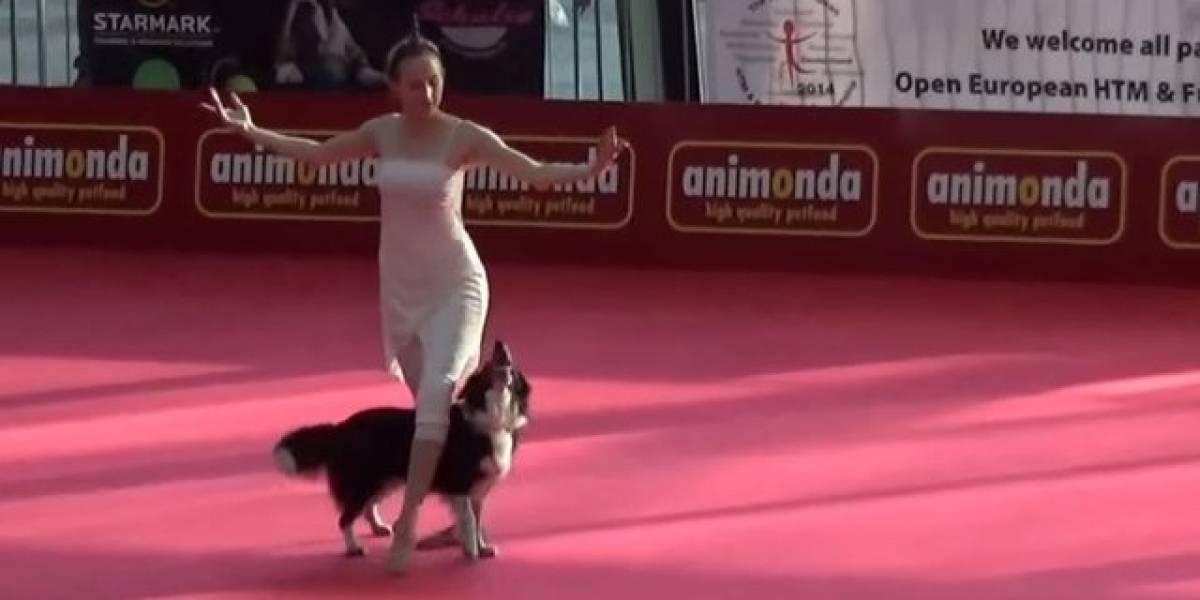 Cachorro realiza performance de dança impressionante com sua dona
