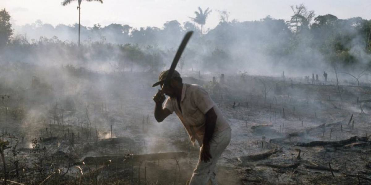 Deforestación en la Amazonia será frenada por la Fuerza Nacional de Brasil