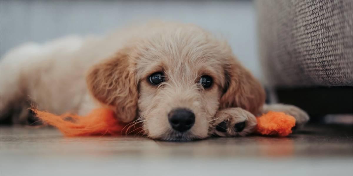 Un perro alerta a sus dueños de peligro que no habían notado con una extraña actitud