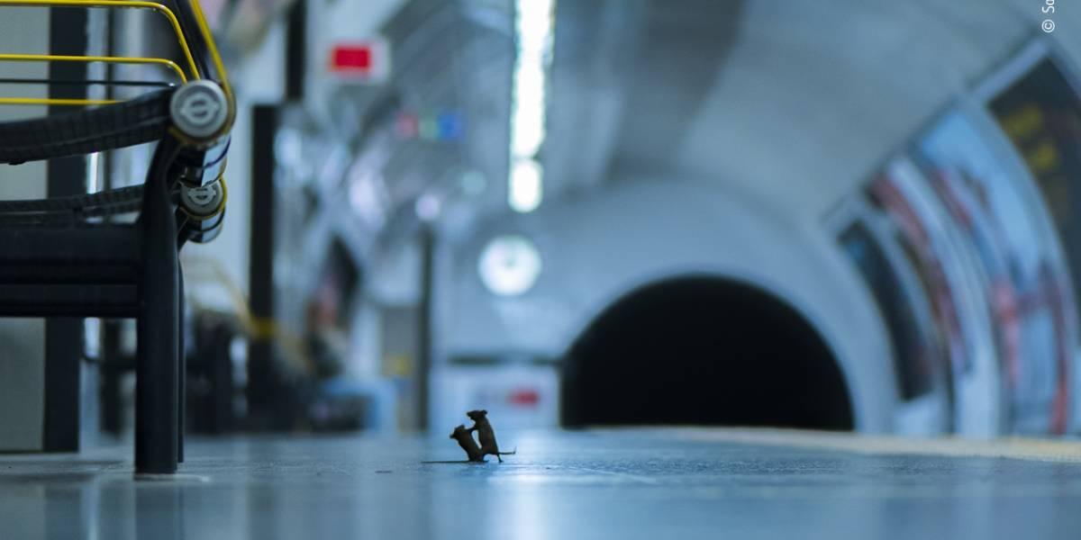 MUNDO: pelea de dos ratones en un metro de Londres