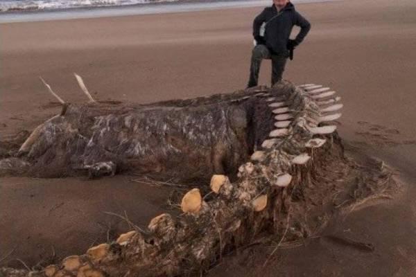 """Esqueleto de """"legendaria criatura"""" fue hallado en playa de Escocia"""