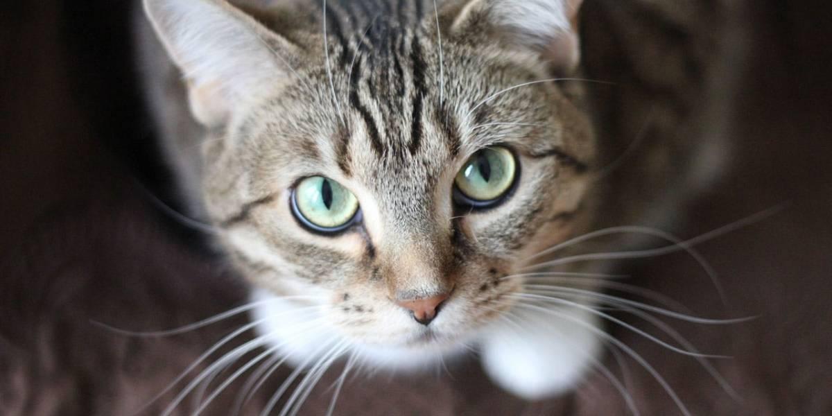 Un gato despierta a su dueña para advertirle de un incendio y salva su vida