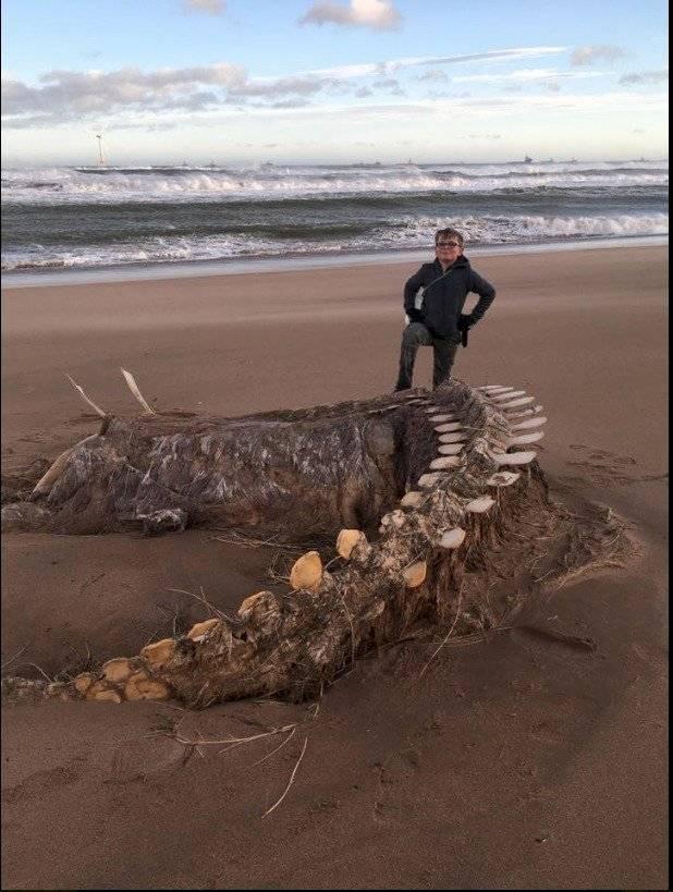 """Esqueleto de """"legendaria"""" criatura fue hallado en playa de Escocia"""