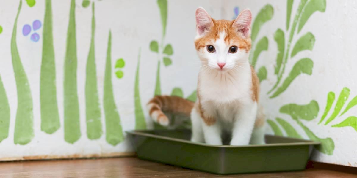 ¿Sabes por qué debes preferir una arena ecológica para tu amigo felino?