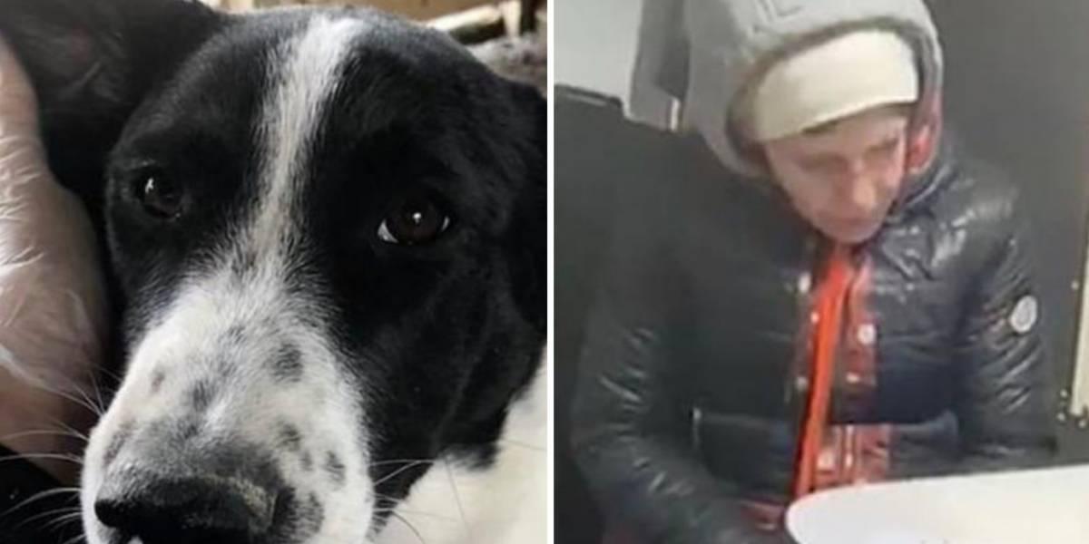 ¡Despiadados! Pareja adoptó una perrita y luego la mató a golpes