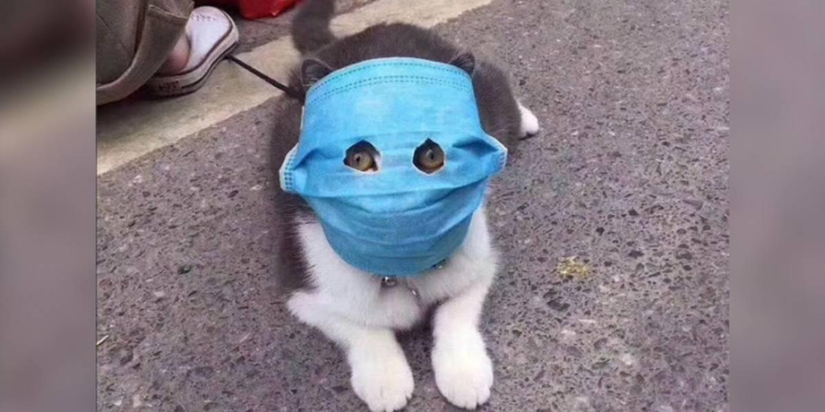 Para no creerlo: hasta las mascotas usan mascarillas en China por el coronavirus