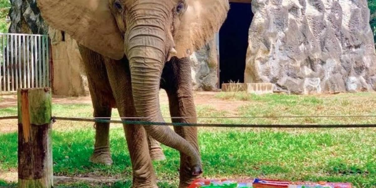 Piden a la Gobernadora el cierre permanente del Zoológico de Mayagüez