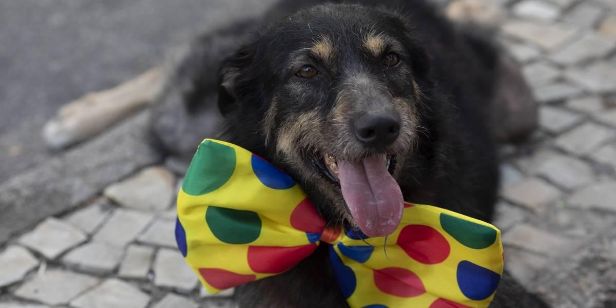 Perritos tienen su propio carnaval en Río de Janeiro