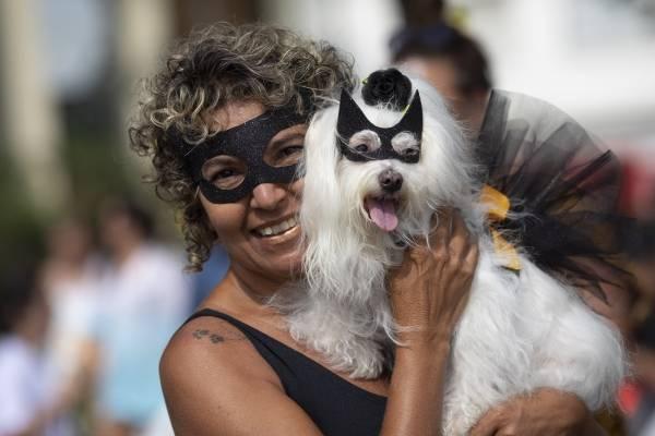 carnaval de perritos