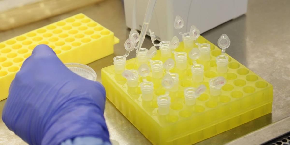 OMS testa dois remédios para tratamento do coronavírus