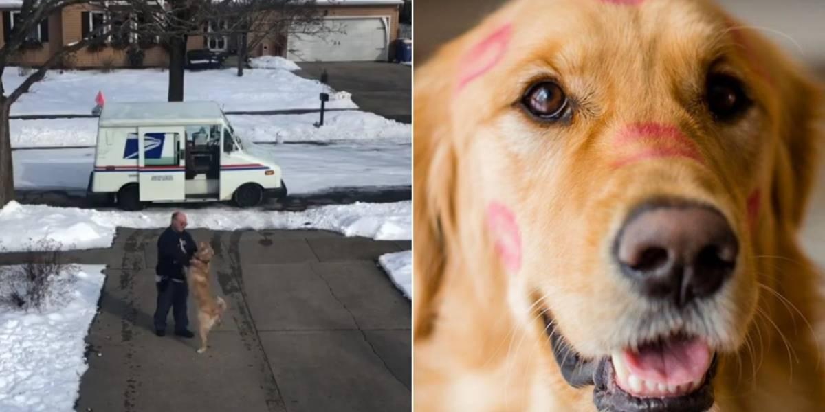 Cachorro se torna amigo de carteiro e o espera com recepção especial todos os dias