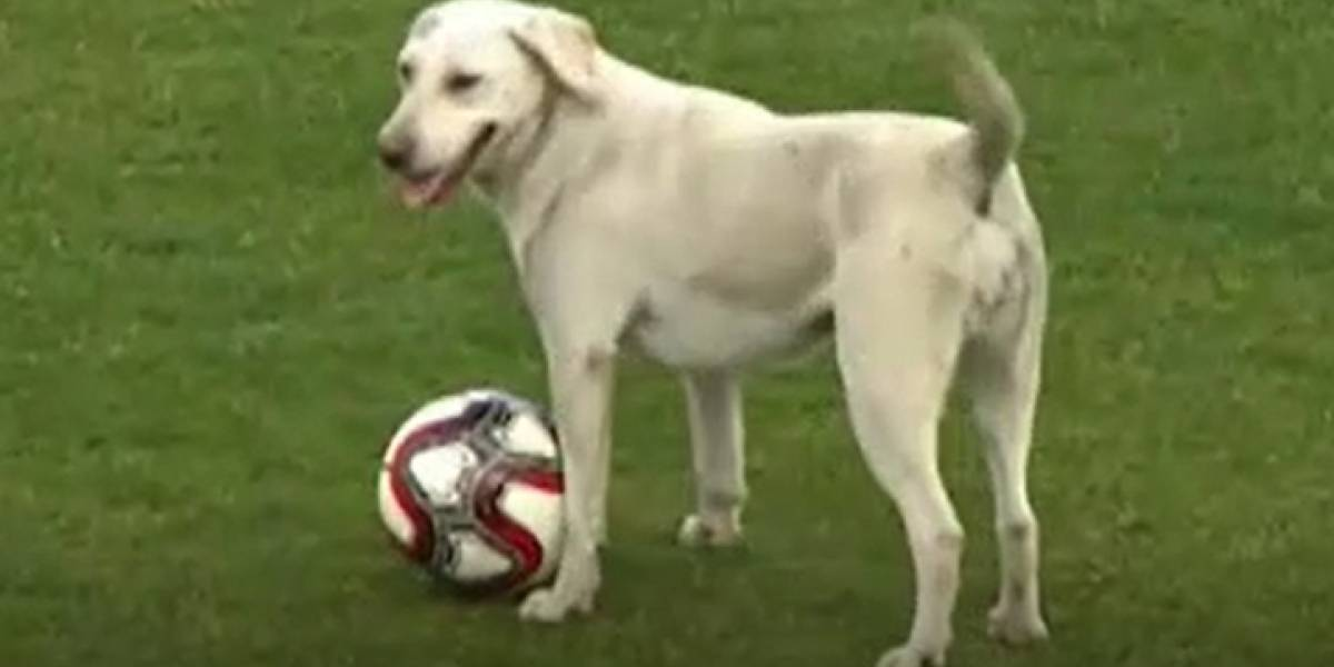 Viral: Partido de fútbol se detiene por interrupción de un perro que se lleva la pelota varias veces