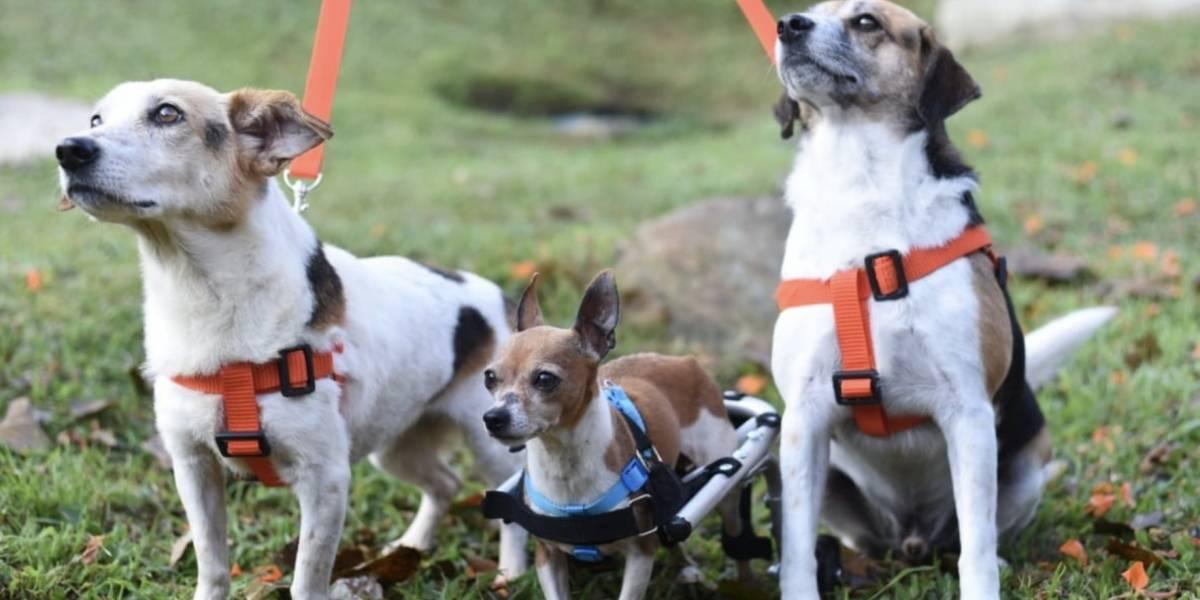 Macarena, Atanasio y Gardel: los perros a los que el amor les devolvió la esperanza