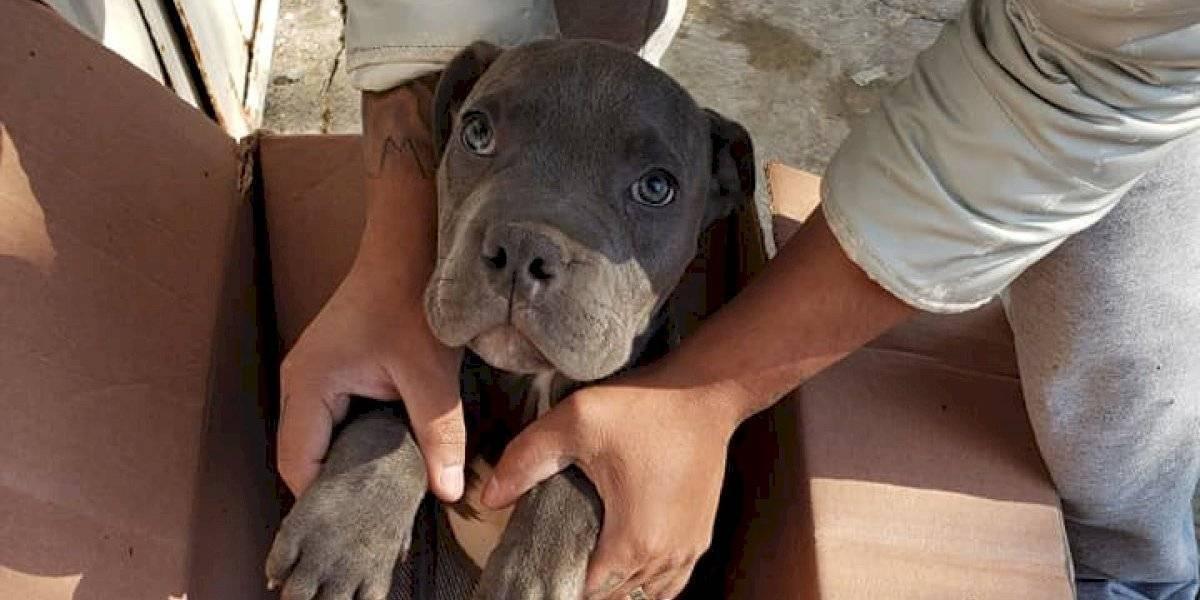 """""""Que nunca me olvide"""": la petición de niño de 12 años que debió dejar a su perro en un refugio para protegerlo de los maltratos de su padre"""