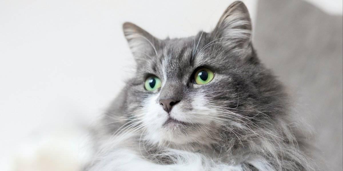 Día internacional del gato: 10 datos curiosos de estos felinos