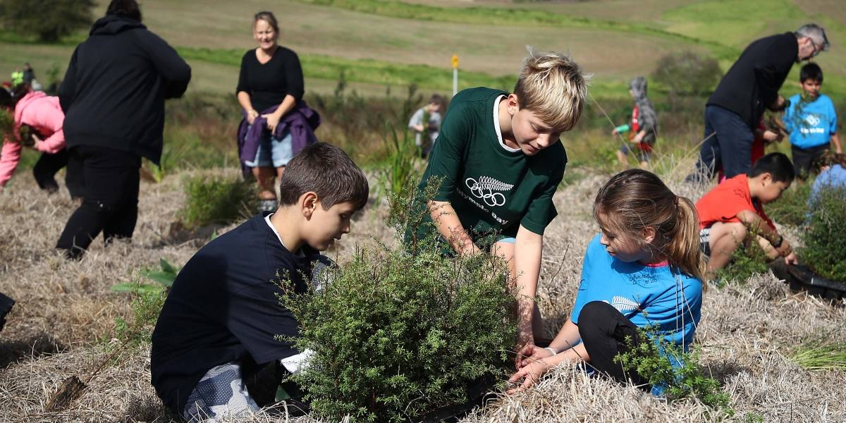 Carrera de siembra masiva de árboles se está acelerando