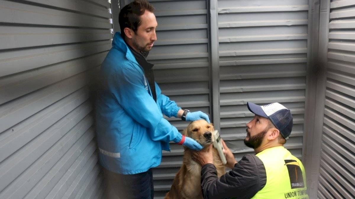 Enfermos, mal alimentados y con falta de vacunas, así estaban los perros que salieron de TM