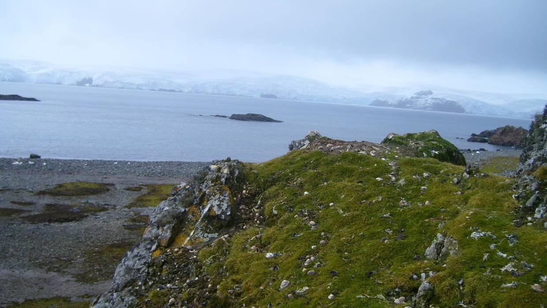 Durante este verano se han registrado temperaturas más altas de los normales en la Antártida llegando incluso a aparecer pasto por la falta de nieve.