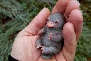 A verdadeira história por trás da foto do 'bebê ornitorrinco' que circula pelas redes sociais