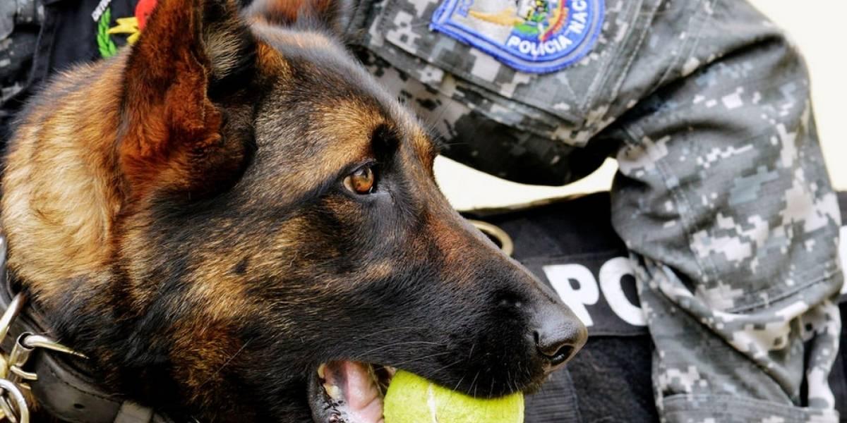 Cuatro canes del GIR se despiden con honores