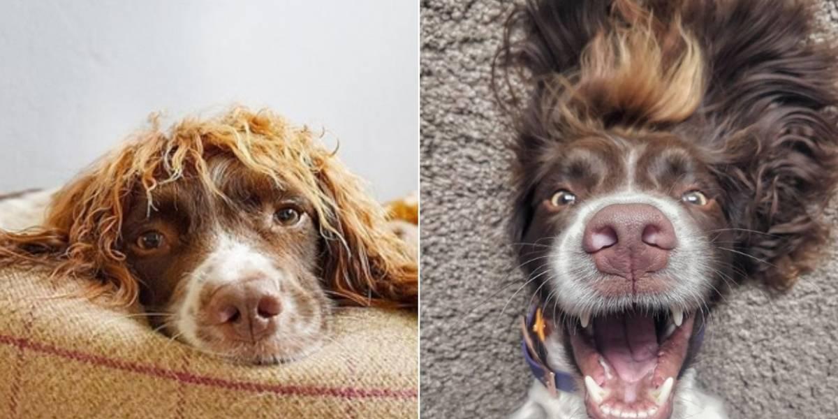 Cabelo de dar inveja faz cachorro ficar famoso nas redes sociais