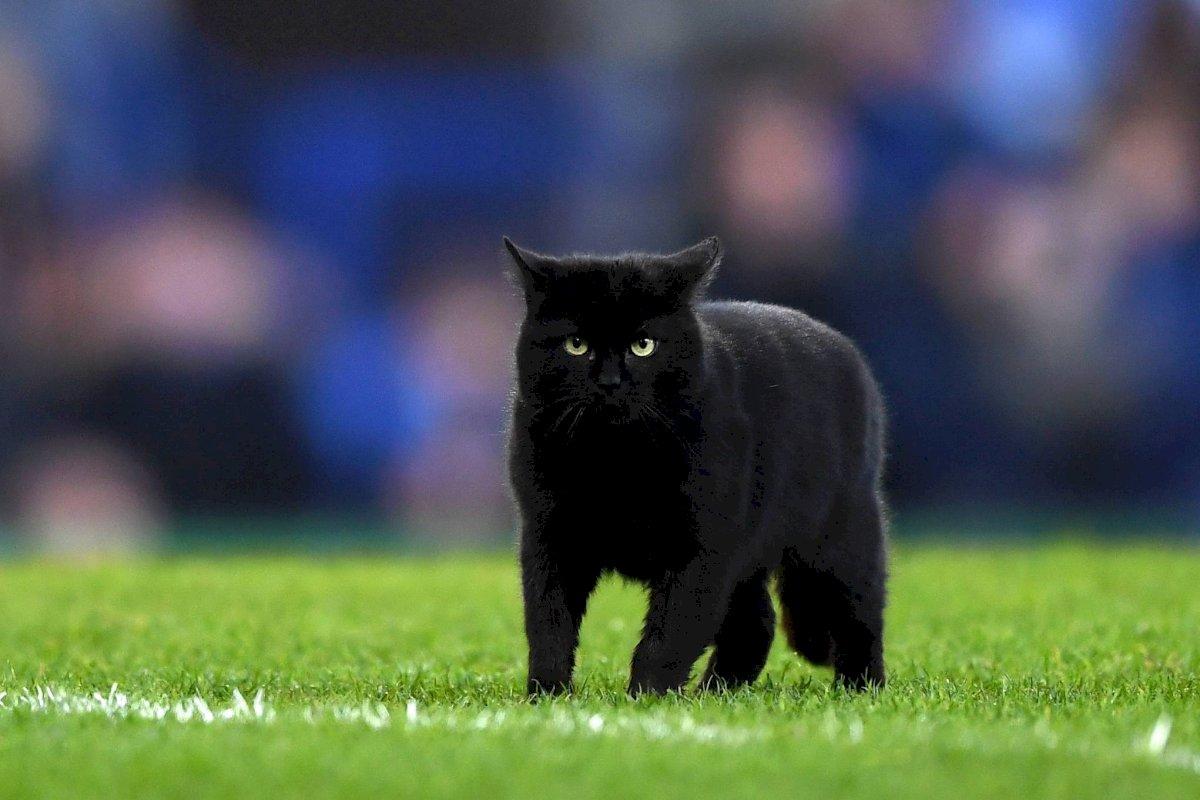 Un gato saltó a la cancha en un partido entre el Everton FC y el Wolverhampton