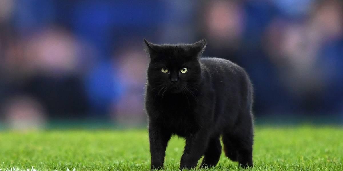 5 gatos famosos que amamos los chavorrucos