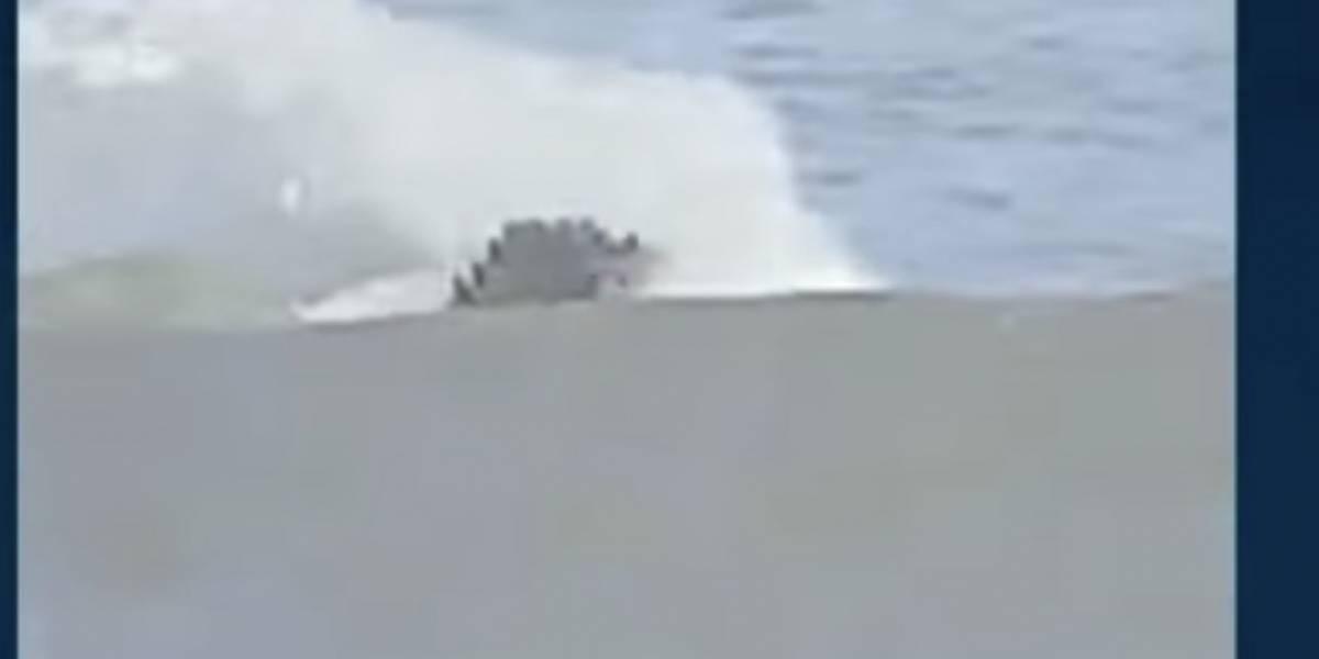 (Video) Un caimán de 4 metros nadaba cerca a unas niñas en sitio turístico colombiano