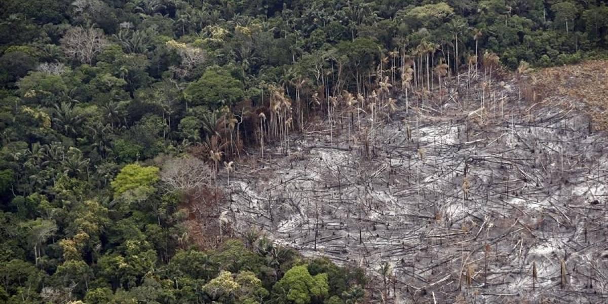 Capturan a 20 personas por deforestación en La Macarena