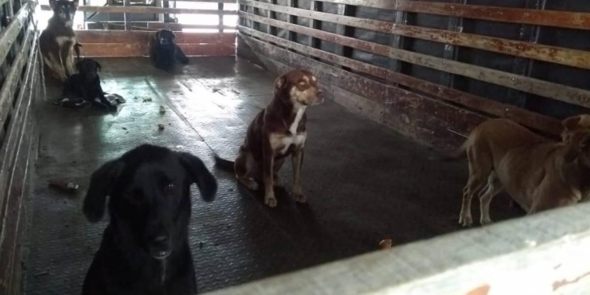 Perros sin hogar fueron llevados por camión del Ejército del sur de Bogotá