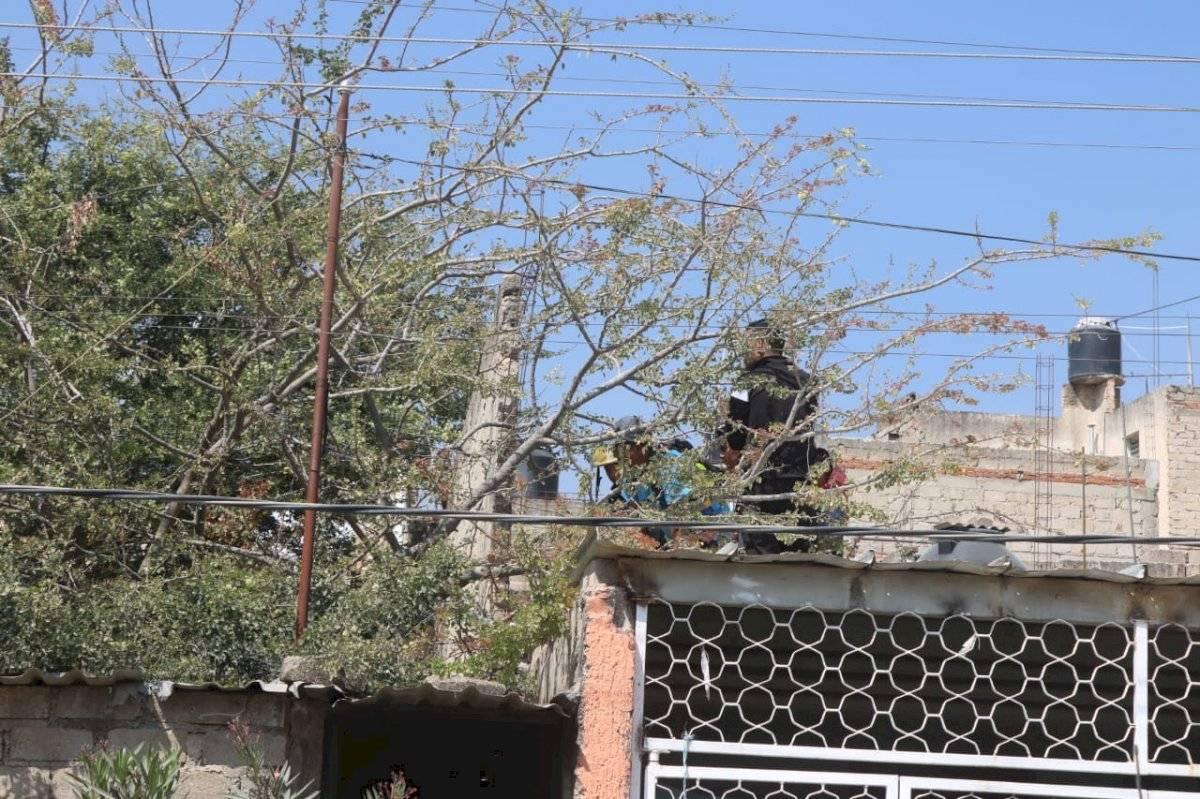 Perro pitbull mata a niño que cayó de un árbol en Zapopan