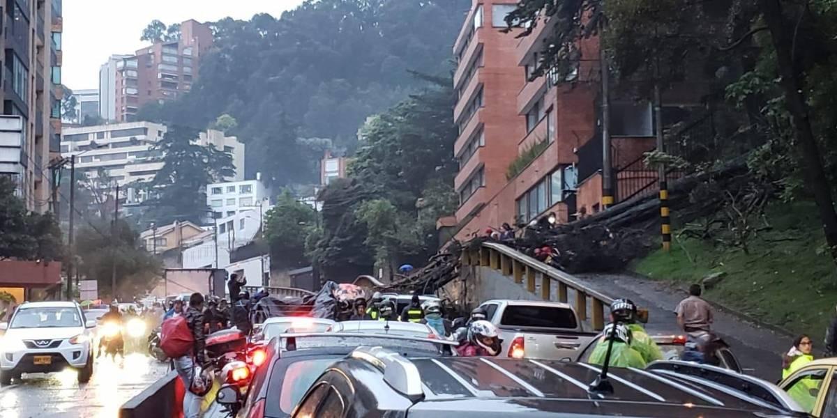 Otro árbol cayó sobre dos carros en una vía principal del norte de Bogotá