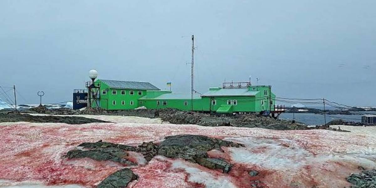 Pésimas noticias: la Antártida se cubre de nieve color rojo sangre y los científicos explicaron sus devastadores efectos