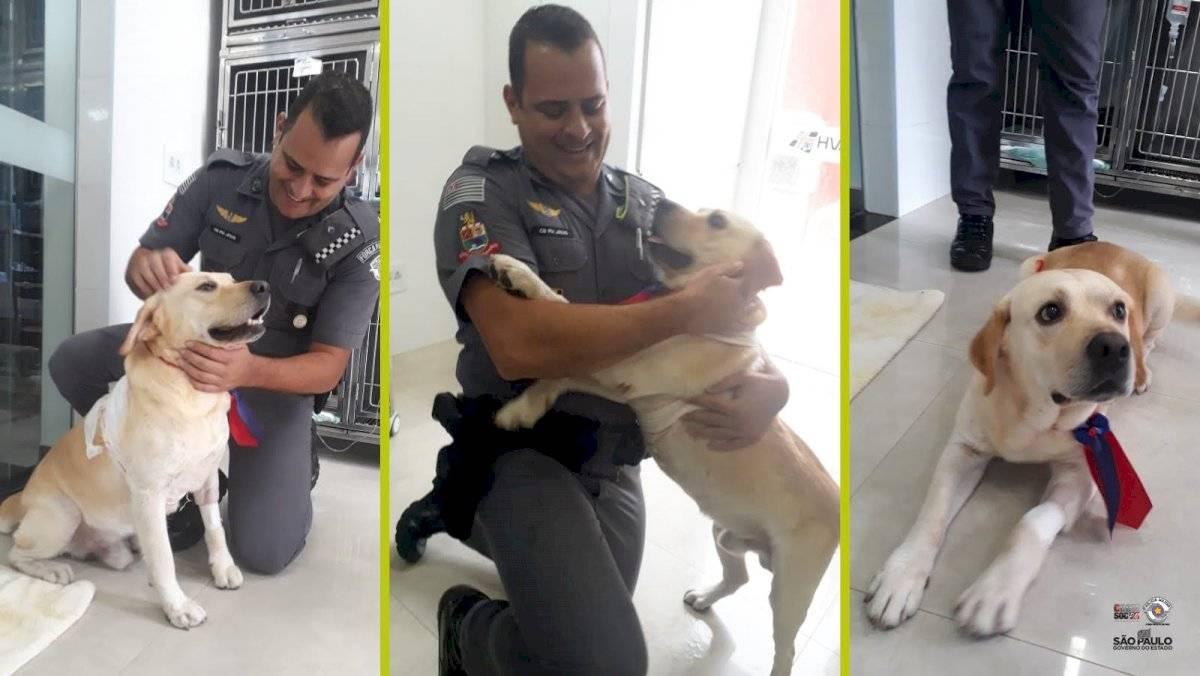 Cabo Jesus, da PM, com Dogão, cão esfaqueado pela própria dona, após cirurgia