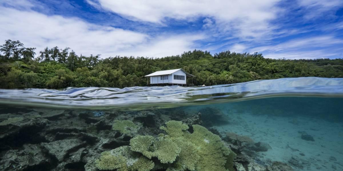 Los arrecifes de coral podrían desaparecer pronto