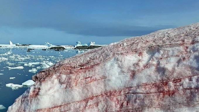 Antártida: científicos desorientados por presencia de nieve rosa en base ucraniana