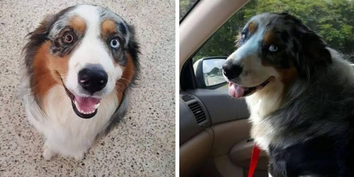 """Encuentran a """"Cloud"""" el perro acompañante de niño con autismo"""
