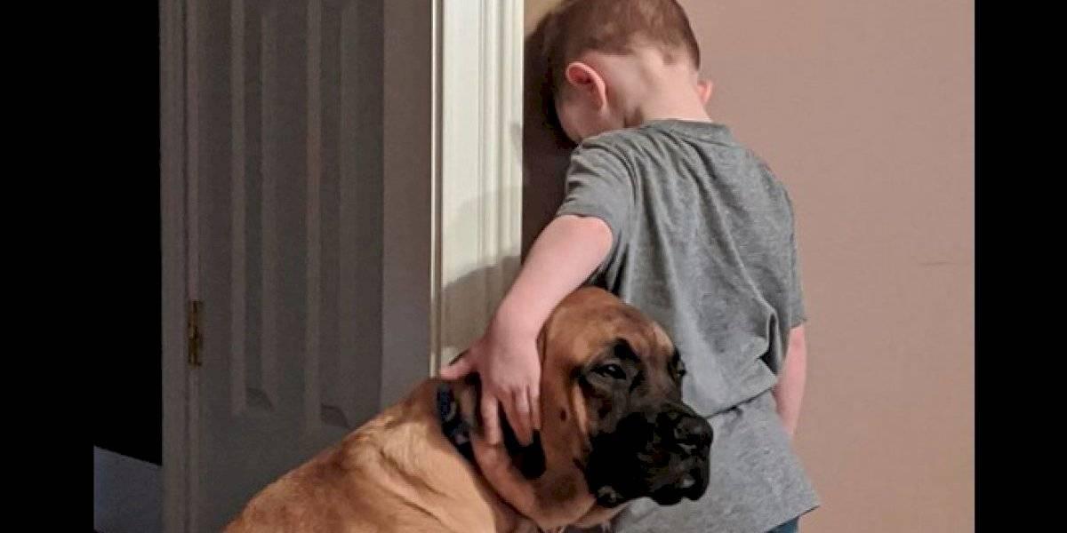Perro acompaña a niño en su castigo contra la pared