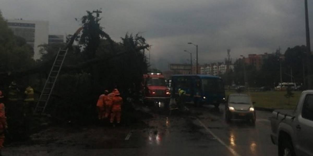 Árbol caído y encharcamientos provocan monumental trancón en la calle 127