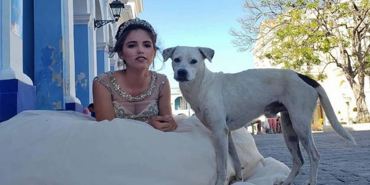 Perro callejero irrumpe en sesión de fotos de quinceañera y enternece a las redes