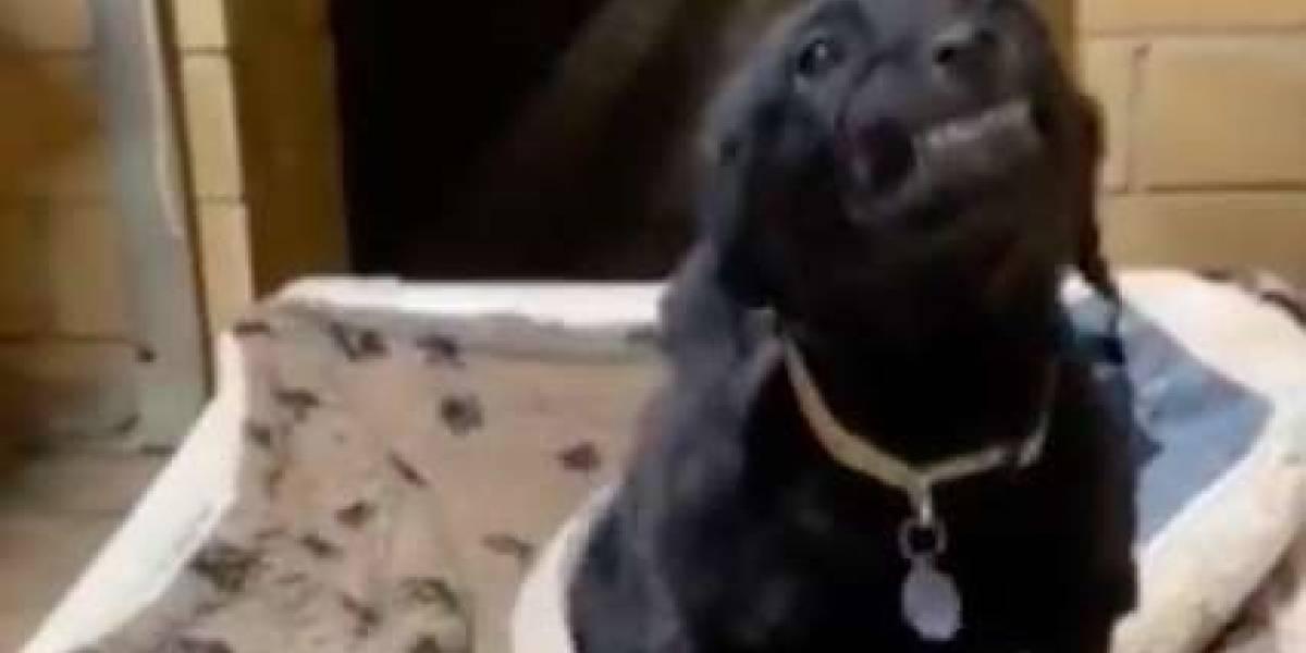 VÍDEO: em abrigo, cachorrinho sorri sempre que recebe um elogio