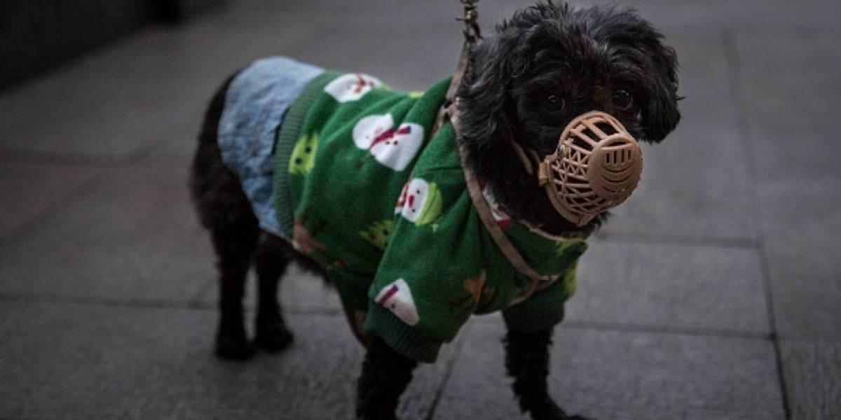 Perro da positivo por coronavirus y es puesto en cuarentena