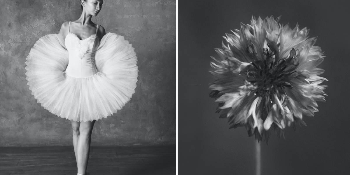 Artista compara la belleza de las flores con bailarinas
