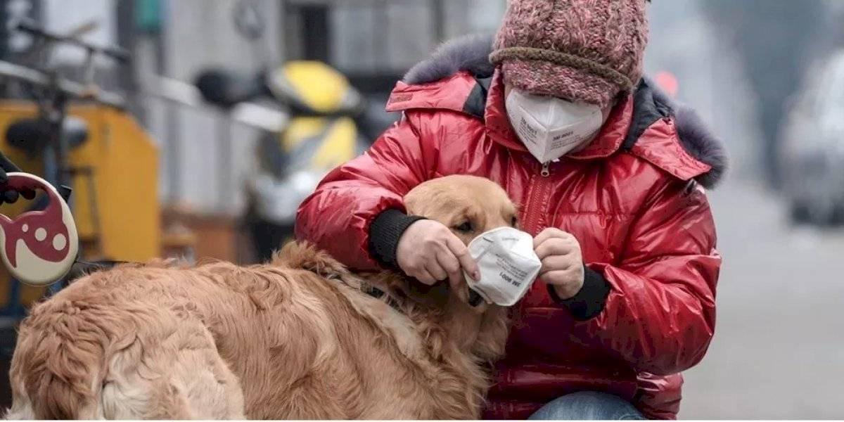 ¿Los humanos pueden contagiar de COVID-19 a los perros?