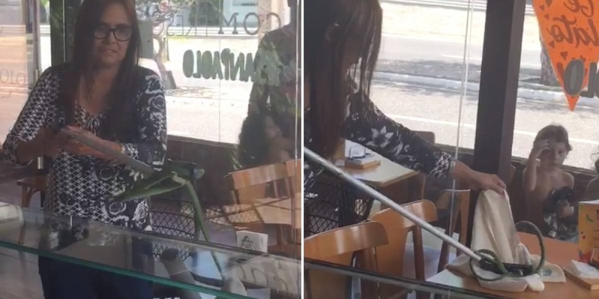 VÍDEO: cobra venenosa é encontrada e resgatada em sorveteria de Teresina