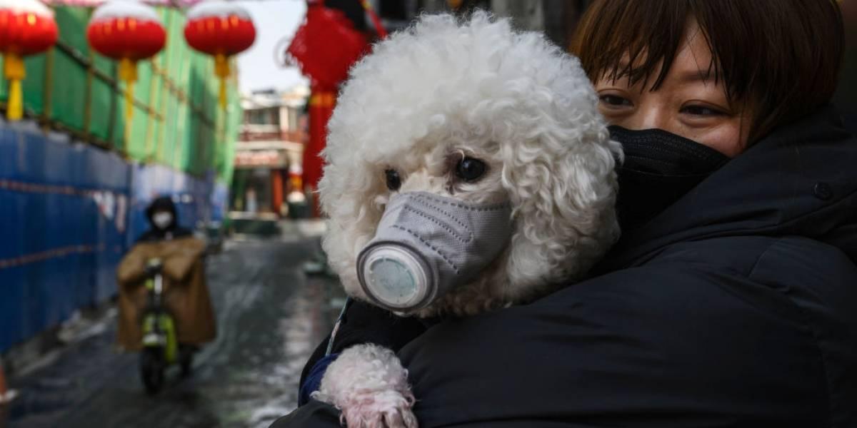 China deve proibir consumo de carne de cachorro e gato
